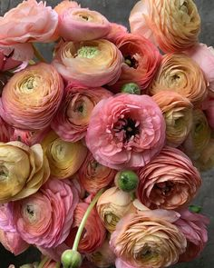 Bekijk meer over #peach #pink #mario #bowser #aesthetic #fruit #rare Room Color Combination, Color Combos, Color Schemes, Colours That Go Together, Garden Entrance, Flower Power, Peonies, Flower Arrangements, Greenery