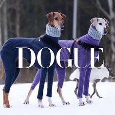 Exceptional Dogs and puppies tips are offered on our site. Take a look and you wont be sorry you did. Animals And Pets, Funny Animals, Cute Animals, Tier Fotos, Italian Greyhound, Dog Memes, Training Your Dog, Animal Memes, Dog Life