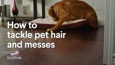 How to Remove Pet Hair or Stains from Hardwood Floors Diy Home Cleaning, Daily Cleaning, Household Cleaning Tips, Household Cleaners, Cleaning Recipes, House Cleaning Tips, Teeth Cleaning, Diy Cleaning Products, Cleaning Solutions