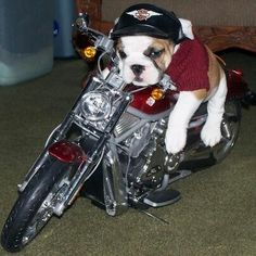 if only it was a Ducati