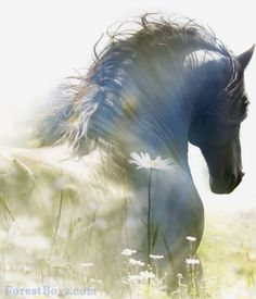 Pretty white grey horse in a field of wildflowers, I can't tell if photograp… All The Pretty Horses, Beautiful Horses, Animals Beautiful, Horse Photos, Horse Pictures, Animals And Pets, Cute Animals, Friesian Horse, Horse Drawings