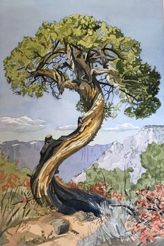 The Old Juniper Tree by Meredith Nemirov - Large (Giclee Print)