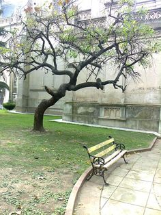 Lonely One Tree, Tree Of Life, Park Benches, Tree Tunnel, Tree Carving, Baltimore Maryland, Tree Sculpture, Wish You Are Here, Nice Place