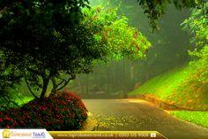 Hakgala Botanical Garden, Sri Lanka   |     Book Now:  https://www.taprobanetravel.co.uk/?utm_source=pinterest&utm_campaign=hakgala-botanical-garden-sri-lanka&utm_medium=social&utm_term=sri-lanka  |     #traveller #travelling #srilanka #travel2017 #hakgalabotanicalgarden #beautiful #hakgala #taprobanetravel #bestdestination #bestplacetotravel  #bookflights #travel #flights #cheapflightstosrilanka #asia #bookcheapflights #booknow #callnow #cheapflights