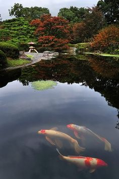 The Dreams of Carp Imperial Palace Garden, Tokyo -- I didn't see koi in there… Koi Fish Pond, Fish Ponds, Palace Garden, Garden Park, Carpe Koi, Japan Garden, Art Asiatique, Imperial Palace, Water Garden