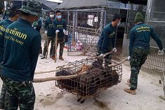 please sign the petition to end the illegal dog meat trade, the torture these poor dogs endure is unthinkable
