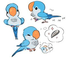 Animal character design, birds, quaker parrot — by Zooque — Find more drawing…