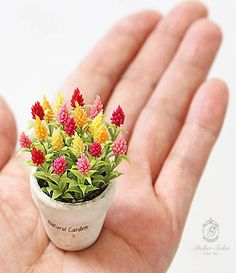 100 Pcs / bag Rare Mini Rainbow Cockscomb Flower Seeds Ornamental Plants High Germination Garden Building Flower Pots Planters - All About Miniature Plants, Miniature Dolls, Flower Seeds, Flower Pots, Flowers For Mom, Mini Plants, Garden Buildings, Polymer Clay Flowers, Ornamental Plants