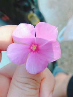 Spring Aesthetic, Hand Photography, Plants, Flowers, Peace, Roses, Plant, Planting, Planets