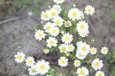 お花たち(2015年4月)