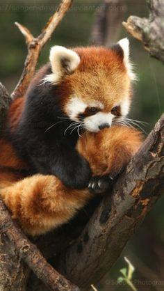 i love my tail...