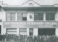 San Francisco Veterinary College; 1898-1918 Veterinary Colleges, School Admissions, College Hacks, San Francisco, History, Tips, Historia, Counseling