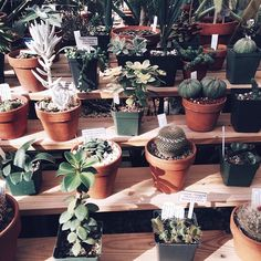 plants, cactus, succulents, home decor Cacti And Succulents, Planting Succulents, Cactus Plants, Planting Flowers, Indoor Gardening Supplies, Vida Natural, Plant Aesthetic, Plants Are Friends, Terrariums