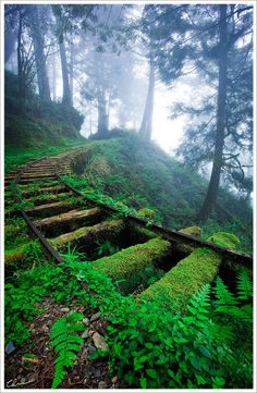 """Impermanence is a principle of harmony. When we don't struggle against it, we are in harmony with reality."" – Pema Chodron. (Moss & fern covered railroad tracks)."