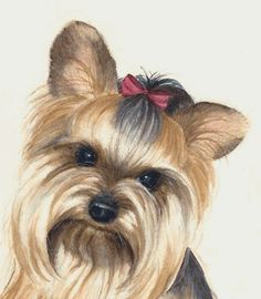 clipart of yorkshire terriers - Google Search