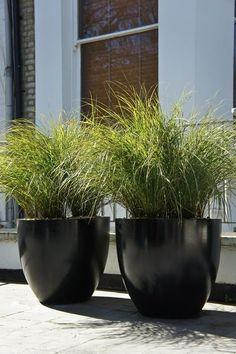 Round black pots & greenery