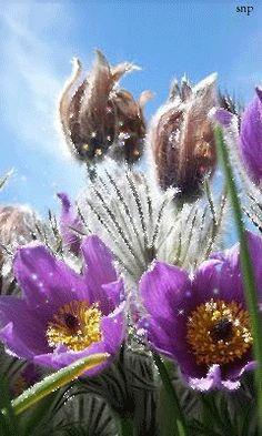 Полевые цветы!