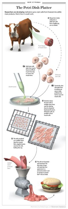 """The Petri Dish Platter [Illustration by Emily Cooper, originally produced for """"Inside the Meat Lab"""" by Jeffrey Bartholet, Scientific American Magazine, June 2011]"""