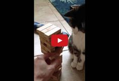 Can You Believe What This Cat is Playing? - a MUST SEE video