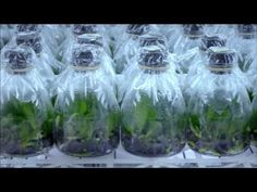 Science Creating Happiness - Royal Base Corporation (English Full Version) RoyalBase2007260,595 views 1.2K 55 Up nextAutoplay 11:47 tissue orchid SATJA P. 492,723 views 10:38 Orchidomania Presents: How to Grow Orchids from Seed Orchidomania 29,360 views 9:38 Inside Ter Laak Orchids GrowerTalks 85,086 views 2:15 Orchid Market - Surabaya - East Java eastjava. com 107,891 views 8:00 AOG Mini Flask Kit - Akatsuka Orchid Gardens AkatsukaOrchid 38,340 views 9:59 Orchid collecting expedition to Los…