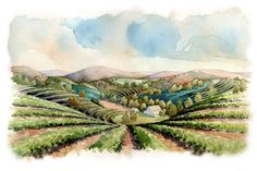 Vineyard Napa Valley . agricultural illustration