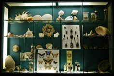 Shells, beetles and butterflies from the Albany Museum, Grahamstown, Eastern Cape. National Art, Game Reserve, Beetles, Art Festival, South Africa, Butterflies, Cape, Shells, Vibrant