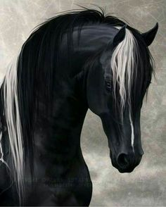 Digital Horse Art by Aura Heiskanen Horses Mad Horses And Dogs, Wild Horses, Animals And Pets, Cute Animals, Kids Animals, Horse Photos, Horse Pictures, Most Beautiful Animals, Beautiful Horses