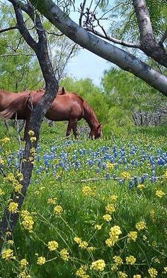 Spring day in the country...