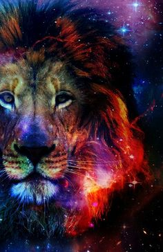cosmi c lion ☆ Tier Wallpaper, Animal Wallpaper, Big Cats Art, Cat Art, Animal Paintings, Animal Drawings, Lion Love, Lion Pictures, Tiger Art