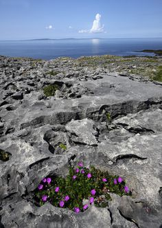 """The Burren (""""rocky land""""), Co. Clare, Ireland extends for 100 mi, encompassing 74,000 acres at 990 ft. altitude."""