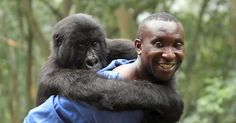Virunga, a new film about the Congo and the mountain gorilla. Available on Netflix. Photo courtesy of Netflix. Park Ranger Andre with Ndakasi, one of the resident Mountain Gorillas of Virunga National Park. Primates, Congo, Best Documentaries On Netflix, Orlando, Cinema Releases, Beautiful And Twisted, The Incredible True Story, Amazing People, Channel