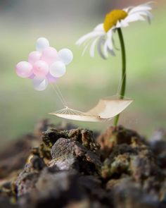 Image may contain: plant, outdoor and nature Miniature Photography, Cute Photography, Creative Photography, Beautiful Nature Wallpaper, Love Wallpaper, Artsy Photos, Cute Illustration, Cute Wallpapers, Stunning Wallpapers