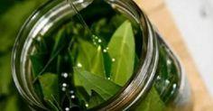 Poucos sabem que a folha de louro é fantástica, além de ser usada na culinária, é super especial para o cuidado da nossa saúde. Essas folhas podem ser utilizadas para a preparação de um excelente óleo medicinal, com muitas propriedades benéficas...