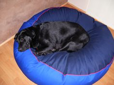 This ia Al a Black Labrador on his pet bean bed Labradors, Black Labrador, Large Dogs, Dog Bed, Bean Bag Chair, Pets, Pictures, Black Labs, Big Dogs