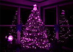 .Wish i had a picture of my Purple and Gold tree.