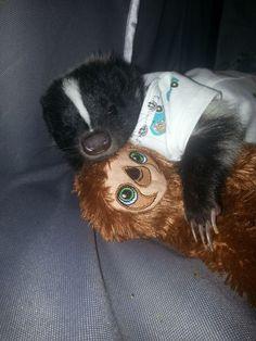 This skunk in a onesie.