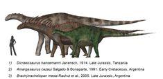 Dicraeosaurids_BW.png (800×388) - Dinosauria, Saurischia, Sauropodomorpha, Sauropoda, Neosauropoda, Diplodocoidea, Flagellicaudata, Dicraeosauridae. Auteur : Nobu Tamura, 2009.