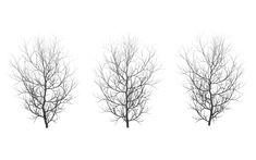 Winter Trees 05 by wolverine041269 on DeviantArt