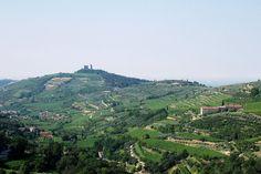 Vini ed Oli prodotti ad Illasi nelle colline di Verona   TENUTA LE LUCI