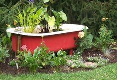 Water Gardens: Bathtub Pond , 1 by HollyAnnS Small Water Gardens, Container Water Gardens, Container Gardening, Backyard Stream, Ponds Backyard, Garden Ponds, Garden Bathtub, Outdoor Bathtub, Back Garden Design