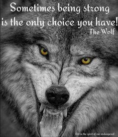 A gallery of timber wolf images and Arctic wolf images, many published in Canadian Geographic. Wolf prints available as fine art prints, canvas and metal Wolf Images, Wolf Pictures, Animal Pictures, Wolf Photography, Wildlife Photography, White Photography, Lone Wolf Quotes, Wolf Qoutes, Angry Wolf