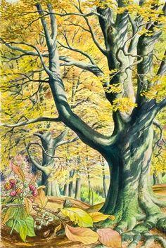 Beech tree - S. R. Badmin - Ladybird Book of Trees