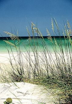 The beaches of Florida's Gulf Coast are   the most beautiful beaches that I have seen..The soft white sand and warm blue   waves that gently sway on a beautiful day..I will forever remain be lost in the   sea..