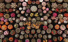Cacti on display in the Great PavilionPicture: Dan Kitwood/Getty Images - 2014