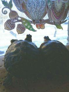 They were looking out the window. #snow #blizzard2016 #jonas   #RES #RedEarsSliders #NinjaTurtles #turtlepower #reptile #slowpoke #turtle #turles #NinjaTurtles #ninjaturtlesintraining #turtlelife #turtlelove #turtlesoup #turtlesoupforthesoul #turtleyourassup