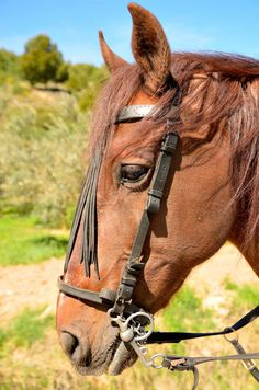 head horse by jcfmorata - Photography on Creative Market
