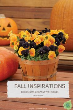 This fall, add drama to your porch with black and orange pansies in a Halloween display. If your winter is mild, they'll bloom from autumn all the way into spring. More info at The Home Depot's Garden Club. Autumn Inspiration, Garden Inspiration, Fall Containers, Flower Containers, D House, Halloween Displays, Annual Flowers, Fall Flowers, Flowers Garden