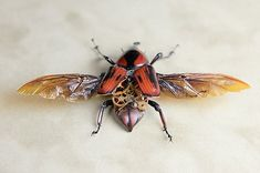 Lindsey Bessanson – Clockwork Insects