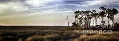 Warm Summer Day In The Saint Marks Wetland