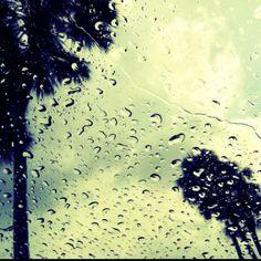 Love rainy days in FL.